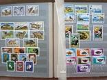 Альбом марок флора и фауна негашеные и гашеные около 640 шт. photo 7