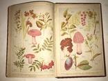 1898 Словарь Травник Траволичение Серьёзный Труд photo 4