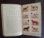 Справочник Охотника 1964 года, фото №9