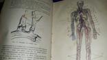 1908 Анатомия и физиология человека