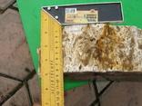 Окаменелое дерево, полированный срез, оригинальная текстура, опал., фото №5
