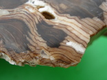 Окаменелое дерево, полированный срез, оригинальная текстура, опал., фото №9
