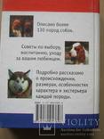 Мини-энциклопедия  Собаки, фото №4