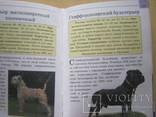 Мини-энциклопедия  Собаки, фото №8