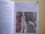 Мини-энциклопедия  Собаки, фото №11