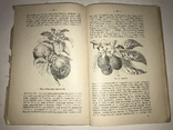 1914 Как вырастить Лимоны и Апельсины в комнате