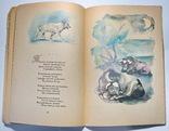 Стихотворения А.А.Фет фото 6
