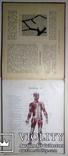1912 Как устроено наше тело. Анатомия для всех photo 8