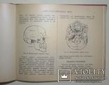 1912 Как устроено наше тело. Анатомия для всех photo 9