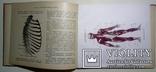 1912 Как устроено наше тело. Анатомия для всех photo 10