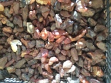 Натуральный янтарь 5 кг, фото №3