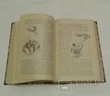 Марк Твен. Полное иллюстрированное собрание сочинений. 7 томов. СПБ. 1911 г., фото №4
