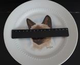 Фарфоровая, настенная тарелка с котом.Bareuther. Германия photo 2