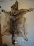 Волк, шкура с объёмной головой, фото №4