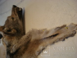 Волк, шкура с объёмной головой, фото №10