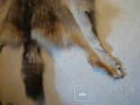 Волк, шкура с объёмной головой, фото №12