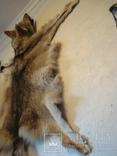 Волк, шкура с объёмной головой, фото №13