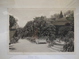 1950-е, Пальмовая аллея Никитского бот.сада