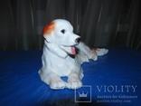 Собака Германия старая номерная, фото №4