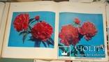 Цветы. Киев 1973 г 224 стр, фото №3