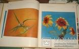 Цветы. Киев 1973 г 224 стр, фото №7
