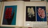 Цветы. Киев 1973 г 224 стр, фото №8