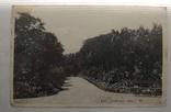 1930-е, Крым, Никитский ботанический сад