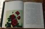 Розы, фото №7