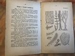Нарис геології, Львів, 1905р., фото №10