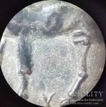 Тетрадрахма. Пантикапей., фото №9