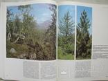 """""""Ботанические сады СССР"""" П.Лапин, 1984 год, фото №9"""