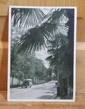 Автотрасса Сочи-Мацеста. Фотоэтюд И. Шагина, 1946 г. Тираж 100 тис., фото №2