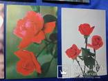 Открытки Розы Вьетнам Болгария Братислава Лейпциг 7 шт, фото №12
