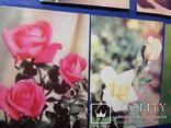 Открытки Розы Вьетнам Болгария Братислава Лейпциг 7 шт, фото №13