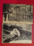 Парижский зоосад, фото №7