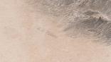 Старинная гравюра. 1835 год. Плот. Викерс. (29,8х21,5см.)., фото №7