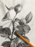 Рисунок карандашом. Графика. Веточка дикой груши (41х29см). Ю. Смаль фото 5