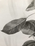 Рисунок карандашом. Графика. Веточка дикой груши (41х29см). Ю. Смаль фото 8