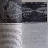 """Дудка """"Гриби в природі та житті людини"""" 1980р., фото №5"""