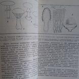 """Дудка """"Гриби в природі та житті людини"""" 1980р., фото №6"""