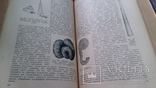 "Курс палеонталогии""Л.Ш.Давиташвили 1949г,тир.5000., фото №7"