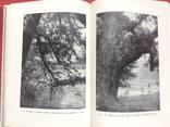 Лісопарки України з ілюстраціями 1968р, фото №2
