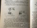 1948 Еврейский сладости Кондитерка, фото №7