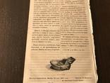1854 Оригинальные Детские игры, Датские народные песни, фото №8