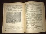1932 Мех из болота Ондатра, фото №10