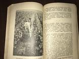 1940 За высокие урожаи Винограда, фото №10