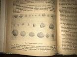 1932 Добыча Змей  Рогов оленей Кости Мамонта Морских зверей, фото №10