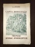 Одесса Сорта винограда Гибриды, фото №2