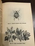 1940 Шкідники та хвороби Хмелю, фото №11