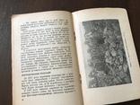 1939 Махорка 117 центнерів Махорки з гектару, фото №6